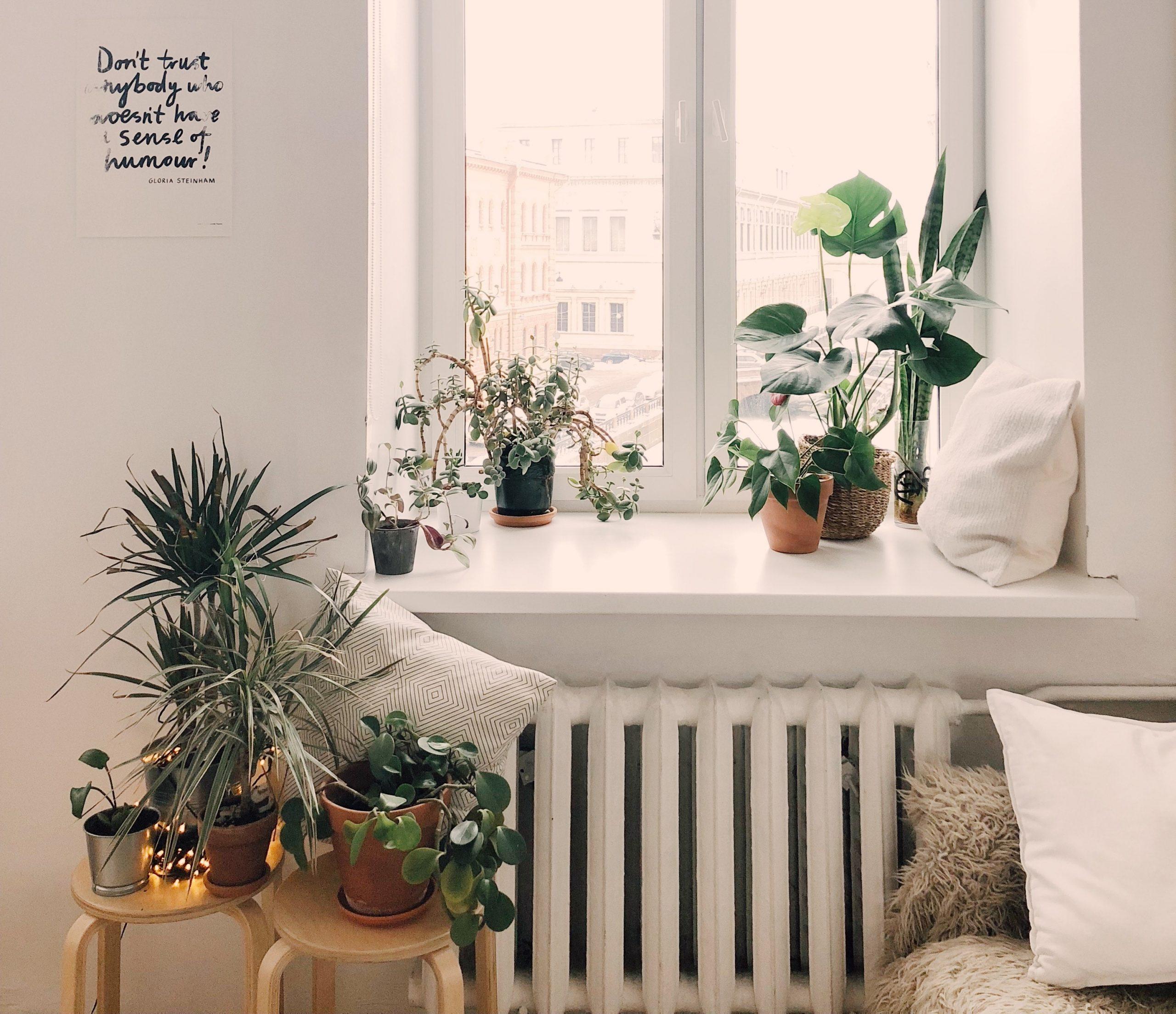 plantas para deco verano